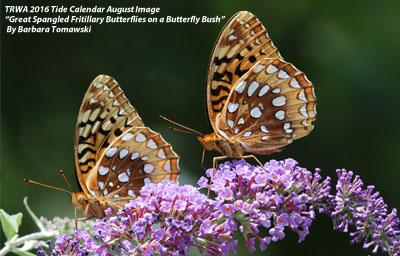 TRWA_butterflies_B_Tomawski